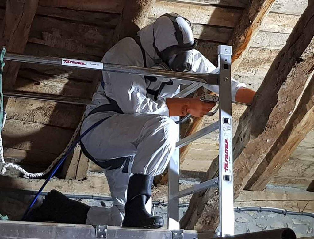Control de plagas: termitas y carcoma.