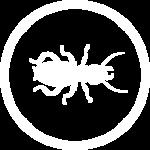 Eliminar carcoma y termitas