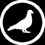 Control de aves en Pirineos